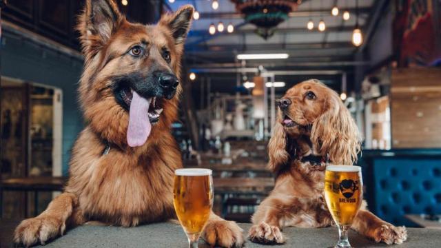 Foto I cani possono ubriacarsi?