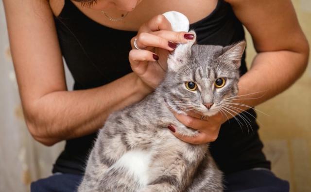 Foto Migliori antipulci per Gatti