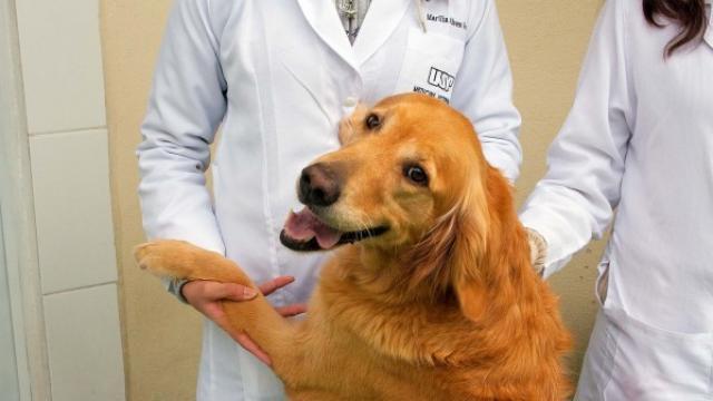 Foto Cure pre e post sterilizzazione nel Cane