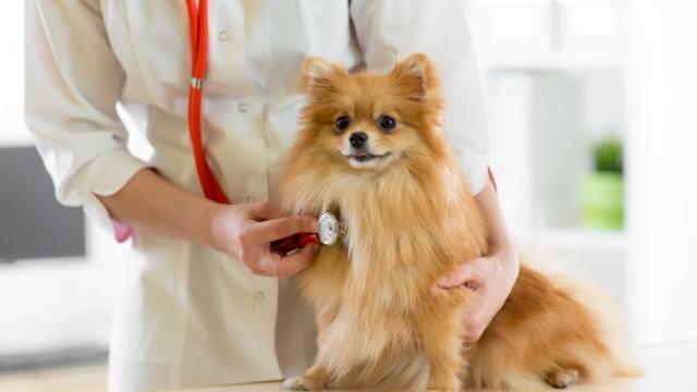 problemi cardiaci cane