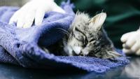 gattino dopo anestesia