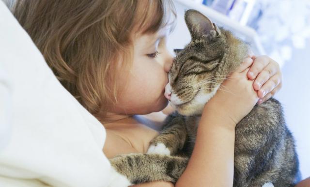 Foto I gatti sono gelosi?