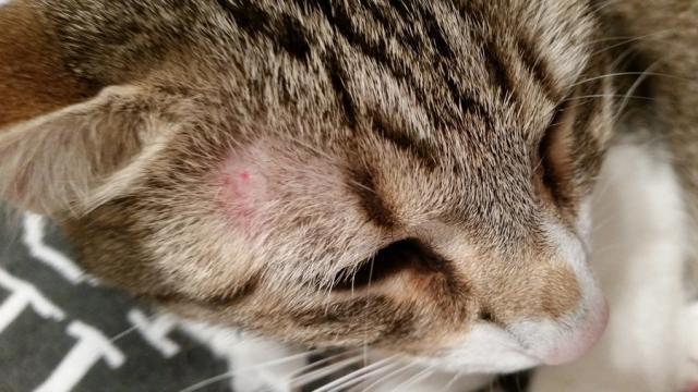 come curare i funghi nel gatto