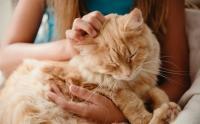 Foto Funghi nel Gatto: cause, sintomi e cure
