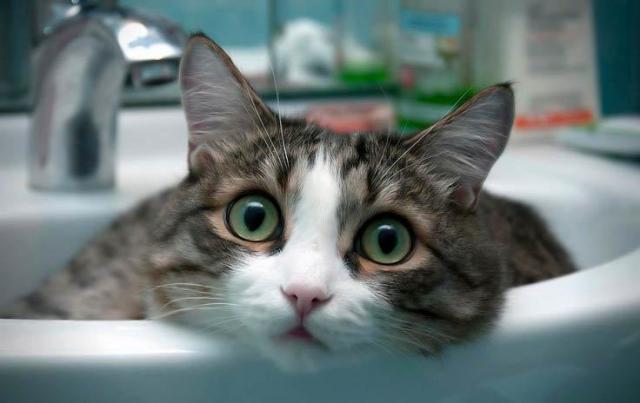 Foto I Gatti si lavano?