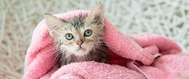 asciugare gatto