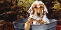 shampoo pulci cane