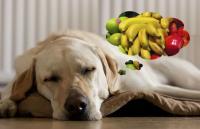 cane mangia mirtilli