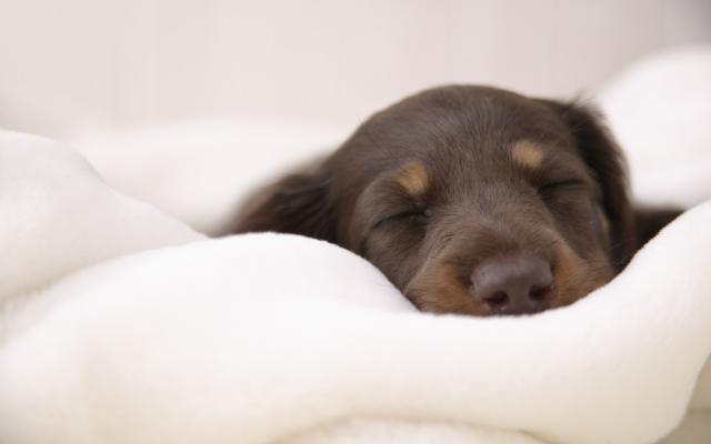 Foto Quando aprono gli occhi i cani?