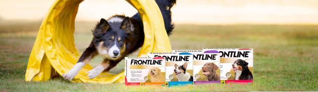 frontline gold cane