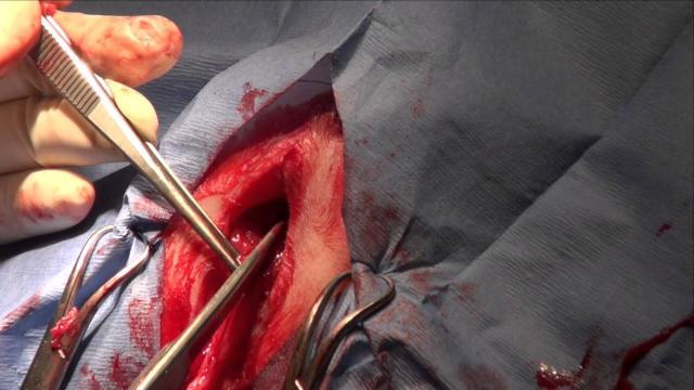 uretrostomia perineale nel gatto