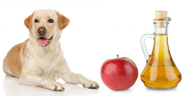 Foto Aceto di mele e benefici nel Cane