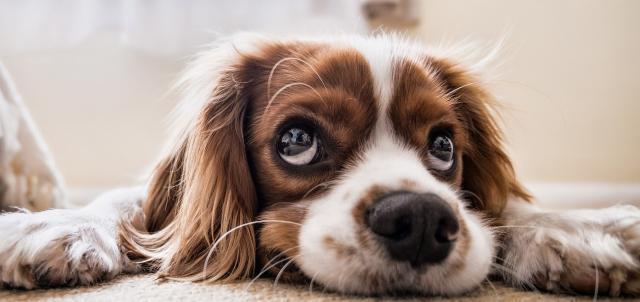 problemi stomaco cane