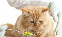 vitamine gatto