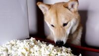 cane popcorn salati