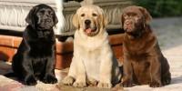 Foto Il colore del pelo del cane potrebbe influire sulla longevità