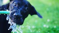 cane beve dalla fontana