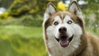 cane occhi colore diverso