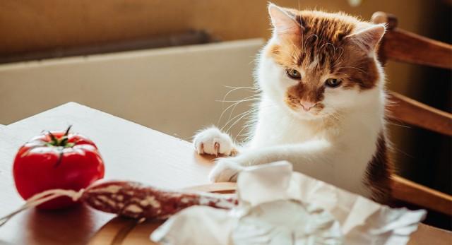 gatto mangia a tavola