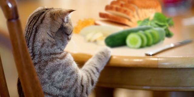 cosa mangia gatto