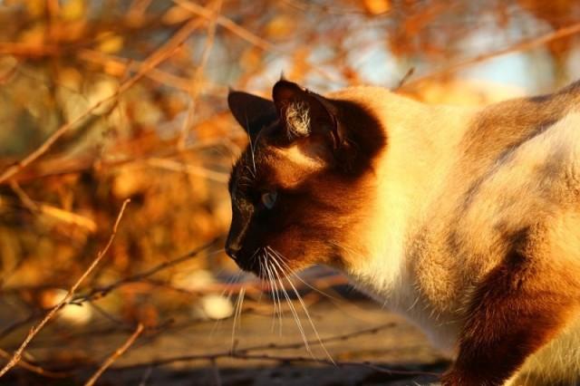 Foto Malattie comuni del Gatto in autunno