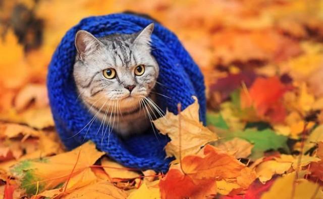 malattie gatto in autunno
