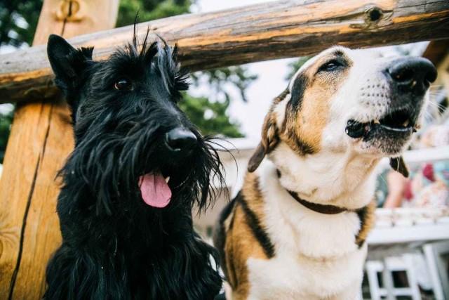 Foto Perchè i cani abbaiano?