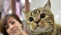 Foto Meningite nel Gatto: cause, sintomi e trattamento