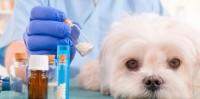 farmaci proibiti cane