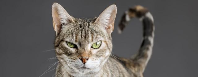 Foto Reflusso gastroesofageo nel Gatto: sintomi, cause e cure
