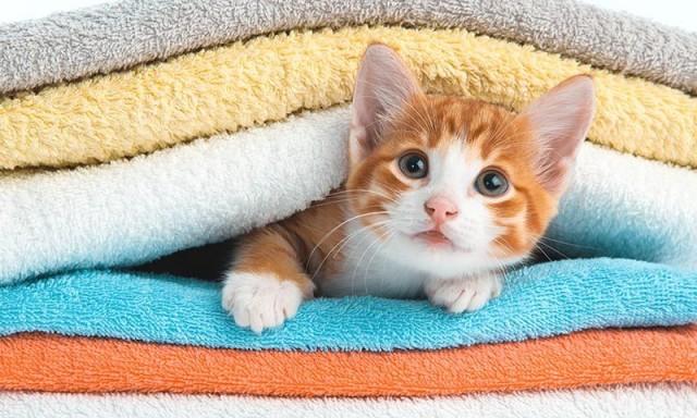 gatto da accarezzare