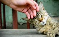 Foto Dove e come si accarezza il Gatto