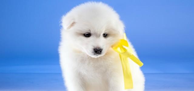Foto Progetto Yellow Dog per Cani