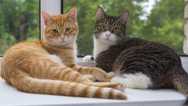 gatti che non litigano