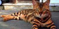 Foto Gatto impazzito? I motivi più comuni