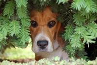 Foto 10 motivi per cui un cane ha paura di uscire