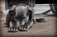 Foto Come tranquillizzare un cane dal veterinario?