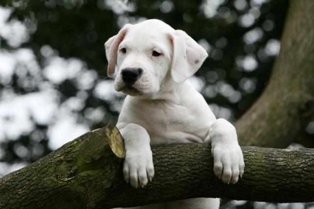 Foto Ciclosporina (Atopica) - Farmaci per cani