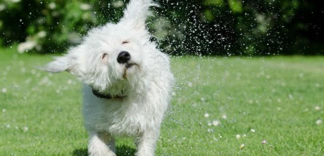 cane si scrolla acqua