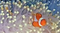 Foto Come si riproducono i pesci?