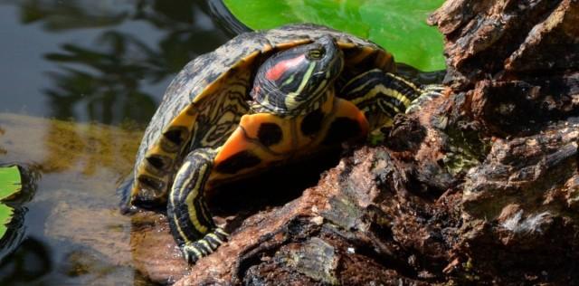 Foto Quanti anni ha la mia tartaruga?