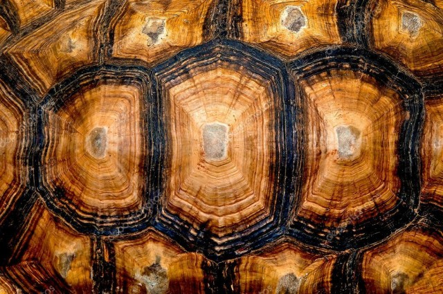 carapace eta tartaruga
