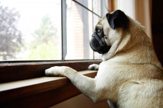 Foto I cani hanno la cognizione del tempo?