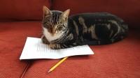 Foto Autismo nei gatti: il gatto può essere autistico?