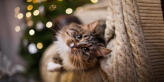 Foto La candeggina è pericolosa per i Gatti?