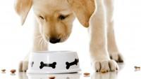 Foto Le Migliori Crocchette Per Cani Sterilizzati