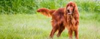 colore cane