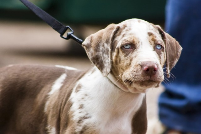 Foto Perchè il naso del Cane cambia colore?
