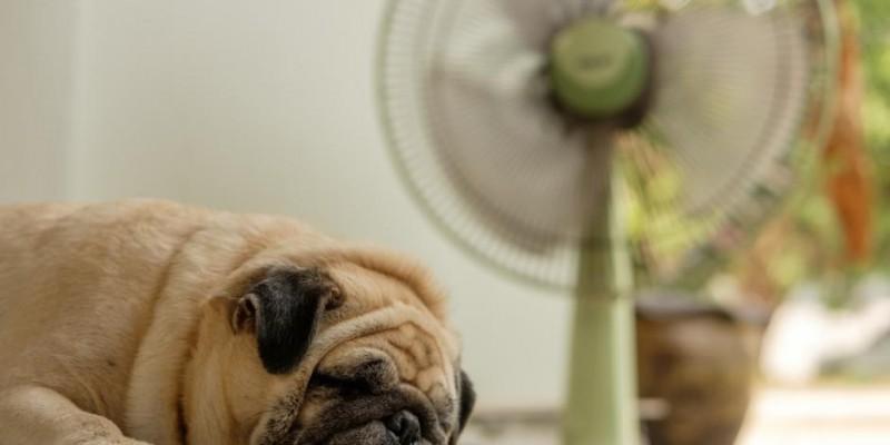 L'aria condizionata fa male al Cane? | Mondopets.it