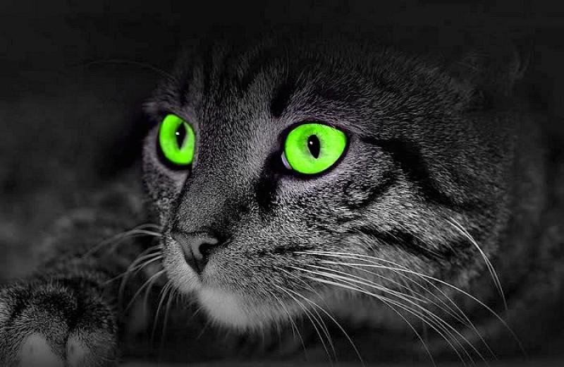 Foto Cosa fanno i gatti la notte?
